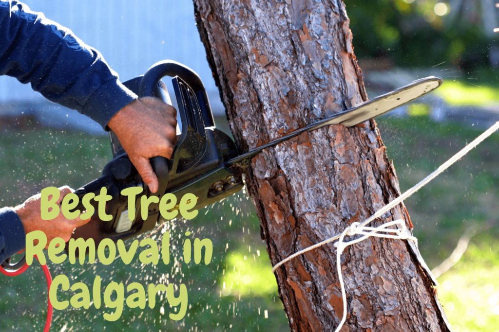 Best Tree Removal in Calgary