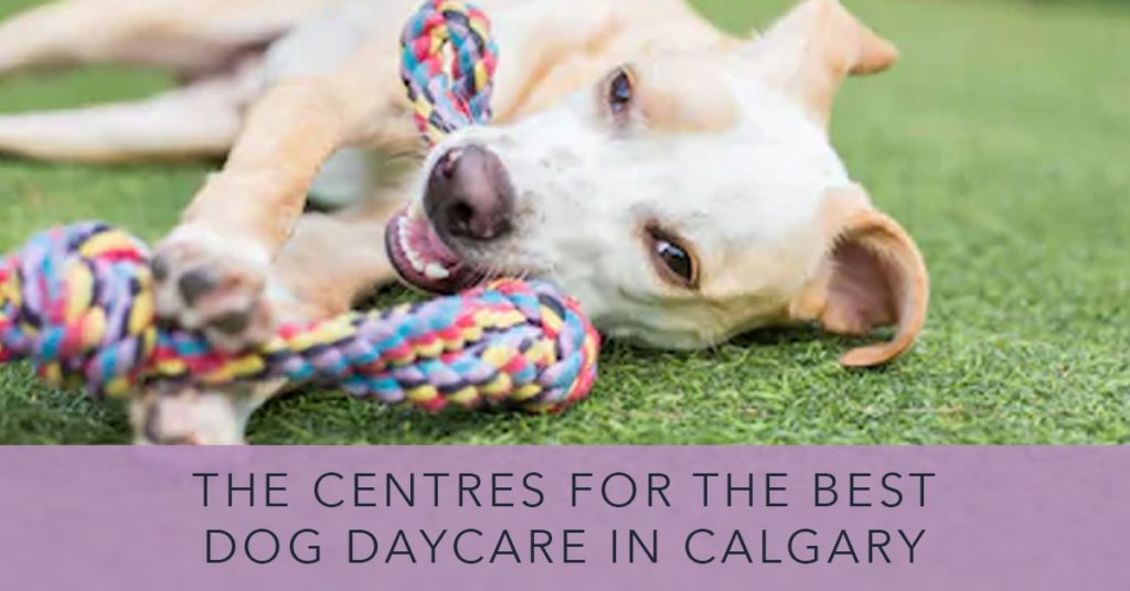 Best Dog Daycare in Calgary
